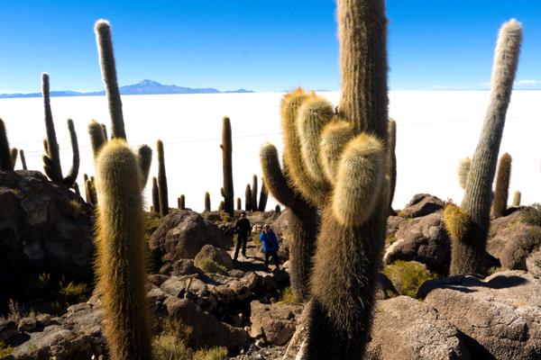 view of the Salar de Uyuni from Incahuasi